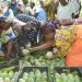 Mangos in Mali