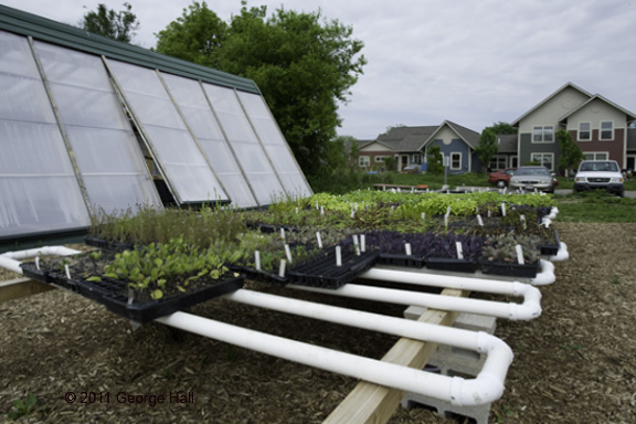 Green house and vegetables ready for planting at Troy Gardens