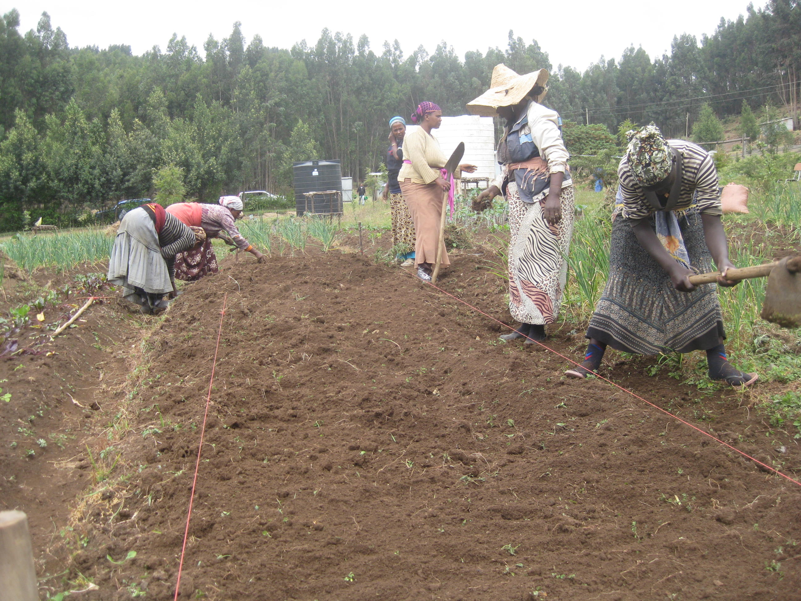 Addis Ababa, Ethiopia: Urban Gardens for Health, Solidarity, and ...