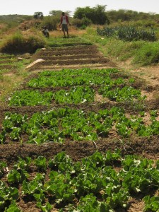 Jamas Garden near Amoud.