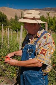 Jerry Pipitone, Pipitone Farms