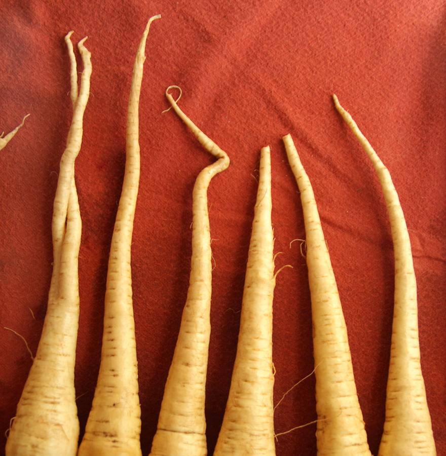 Spindly tips...