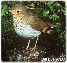 Photo credit: Cornell Lab of Ornithology