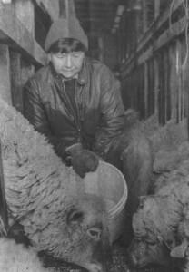 Lambing Time!