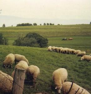 Haying the Trefoil Pasture