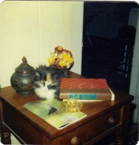 ZhuZhie as a small kitten