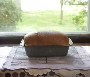 A nice high loaf!