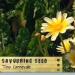 Savoring Seed