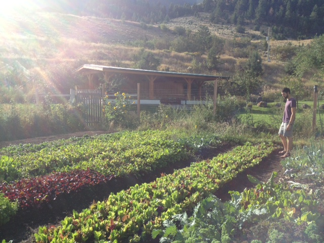 Ian checks out the gardens at Chico Hot Springs Resort: Hyper-local food!