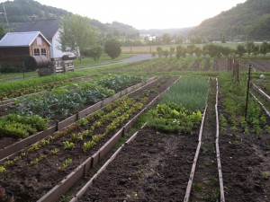 The Riverside Hotel garden, source of lettuce for salads and fruits for desserts