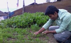 In a family foood garden, Chajul