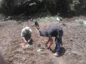 Planting a family food garden