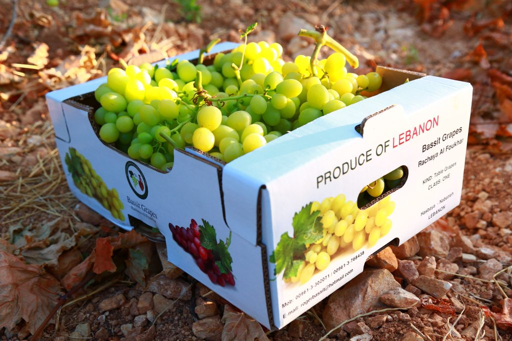 The majority of Lebanon's grapes are table grapes, and the sector provides a livelihood for 20,000 households.